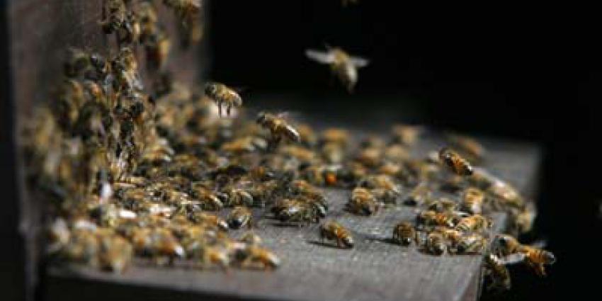 Vanaf 2016 ook biologische bijenhoning van Nederlandse imkers