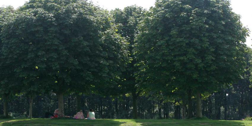 bomen-zomer-zon-schaduw