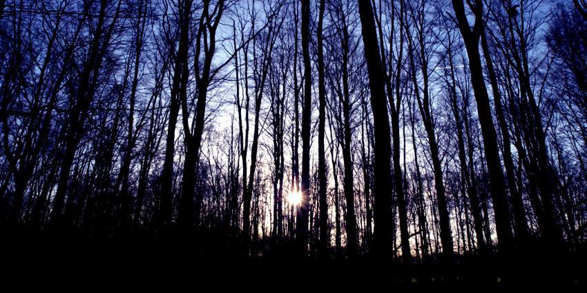bomen-zon-bos