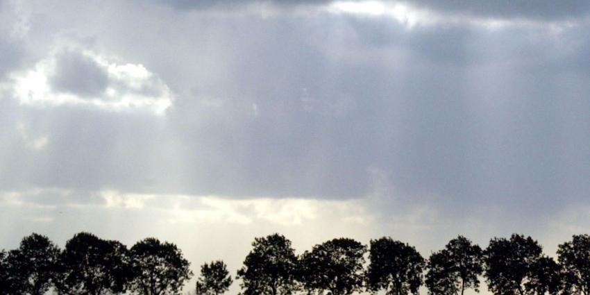 Partij voor de Dieren boos over massale bomenkap in natuur en recreatiegebied Vlietland