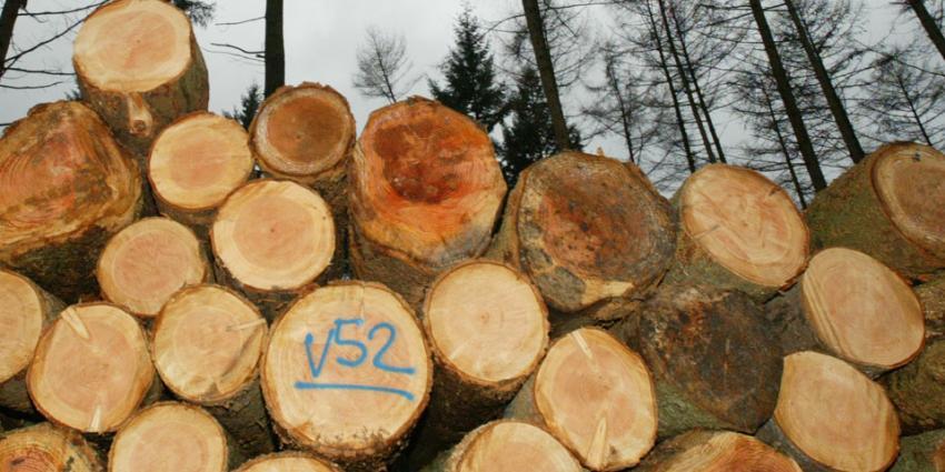 Veel bomen rot rondom Het Oude Loo