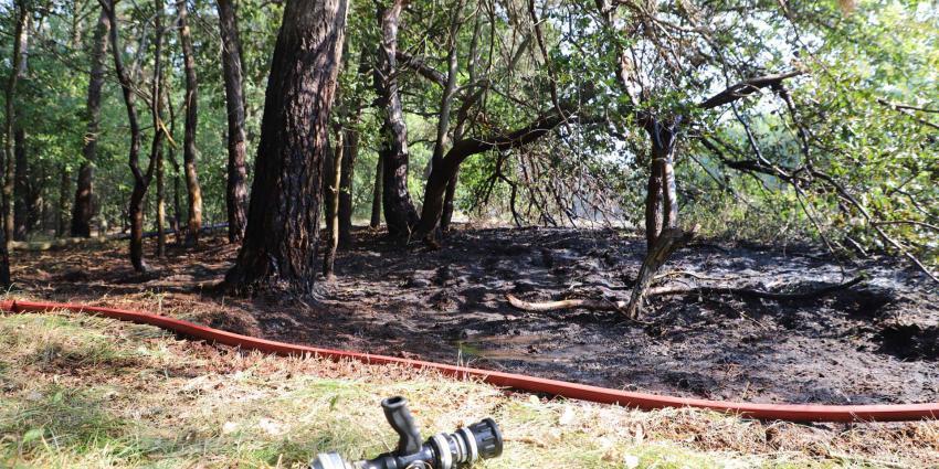 bosgebied-brand-bomen