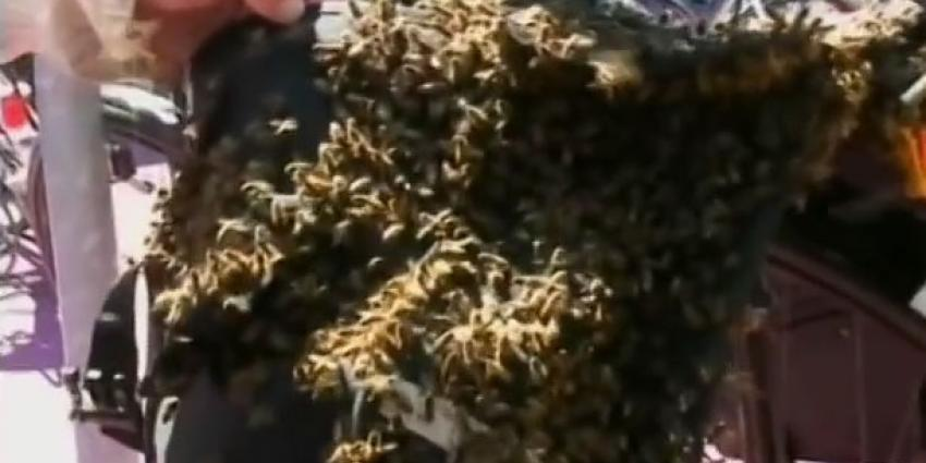 Bijen in fietstas