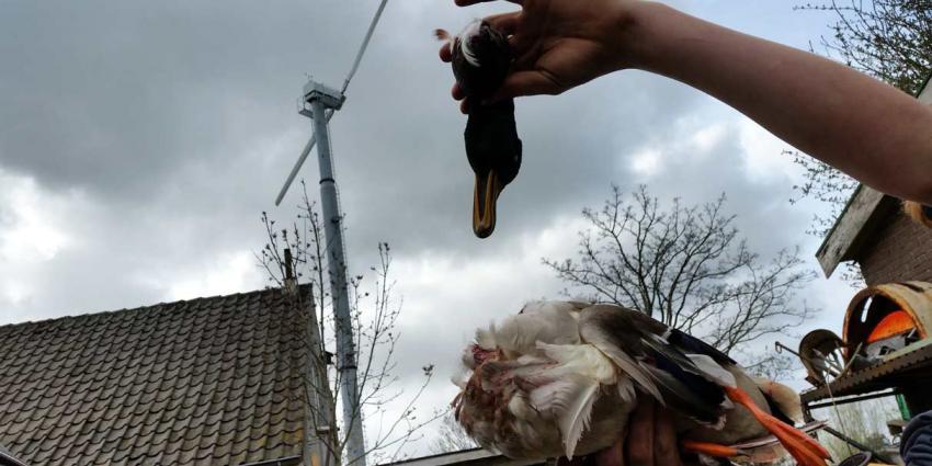 Aantrekkende wind zorgt voor dubbele inkomsten voor boer