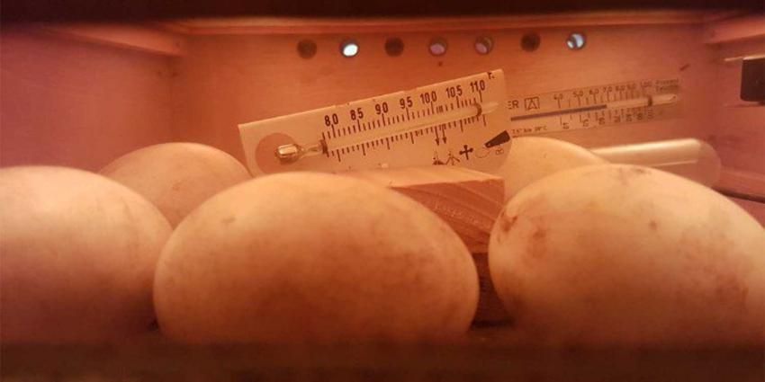 eieren-broedmachine