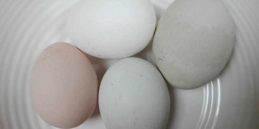 eieren-schaal