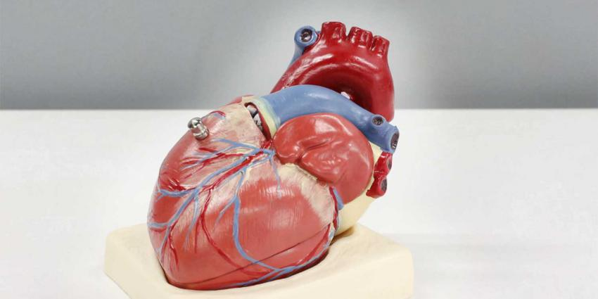 hart-model