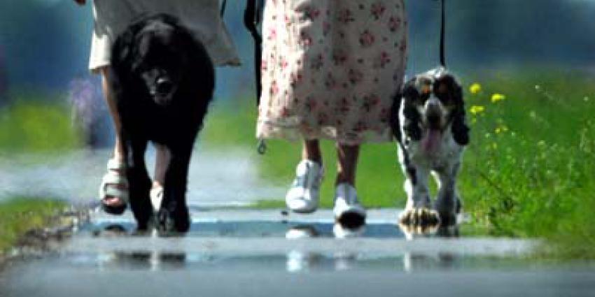hitte-hitteplan-hondjes-uitlaten