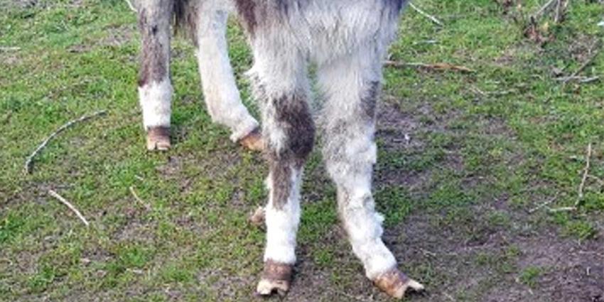 'Ezel' krijgt proces-verbaal voor slechte verzorging dieren
