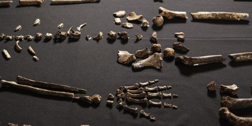 Onderzoekers vinden nieuw mensachtige; de Homo Naleidi