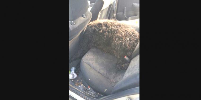 Hond gestikt in snikhete auto in Hoensbroek
