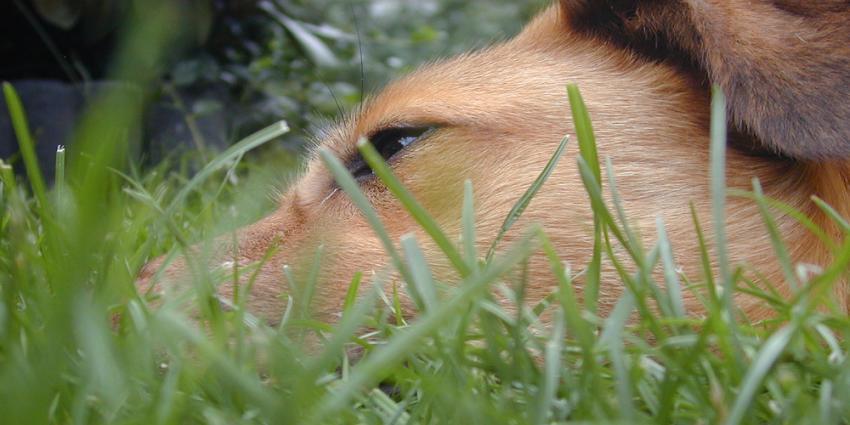 Foto van hond | Archief EHF