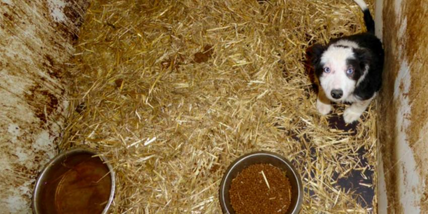 Inspectie haalt 23 honden weg bij vermeende Brabantse hondenhandelaar