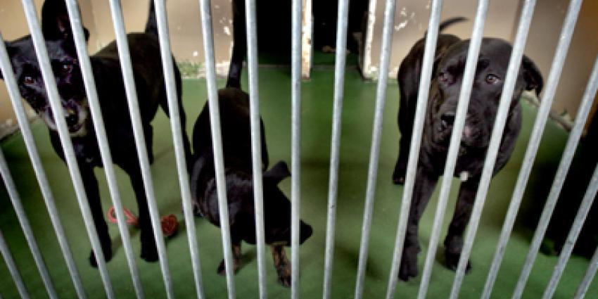 Universiteit Maastricht heeft 8 Labradors weggedaan
