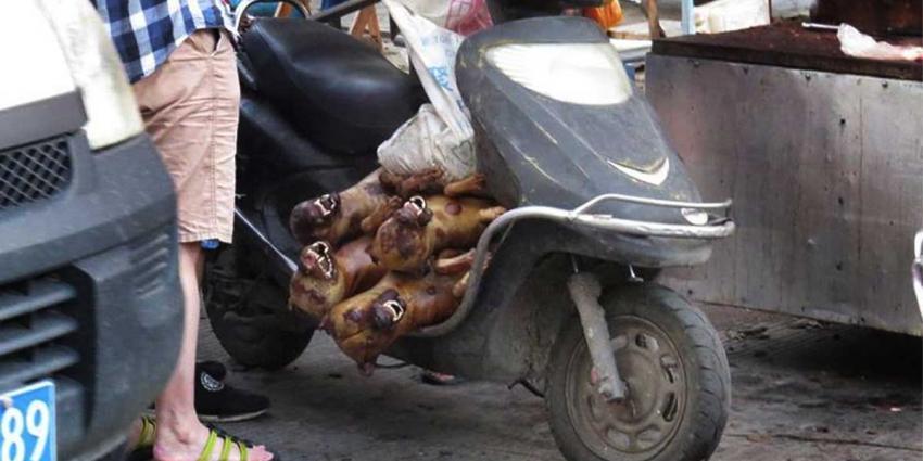 Voorlopig verbod Yulin hondenvleesfestival in China