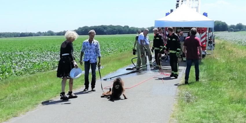 Hond uit afwateringsbuis gered