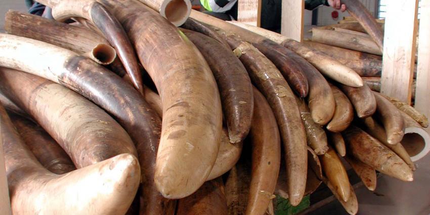 foto van ivoor | fbf