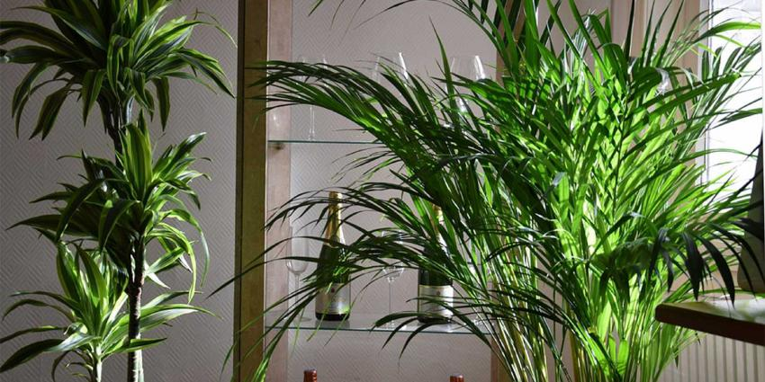 kamerplanten-huiskamer
