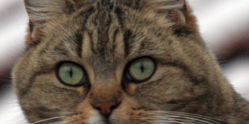 Kat redt gezin bij woningbrand door te bijten