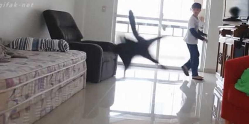 Deze kat wat voor AJAX?