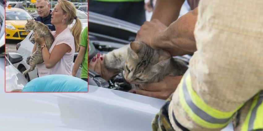 Kat vast onder motorkap auto