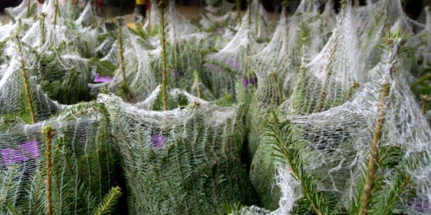 Politie houdt verdachte in Utrecht aan met gestolen kerstboompjes in auto