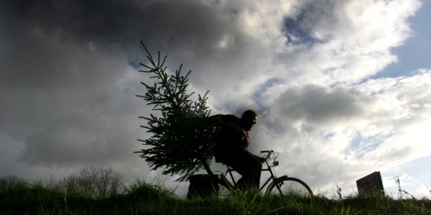 Nederland massaal op pad voor kerstboom