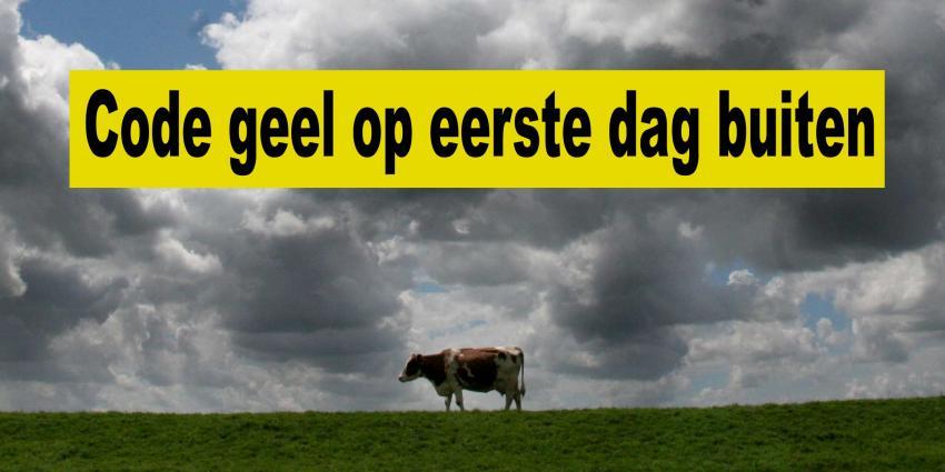 Koeien op eerste stormachtige lentedag de wei in