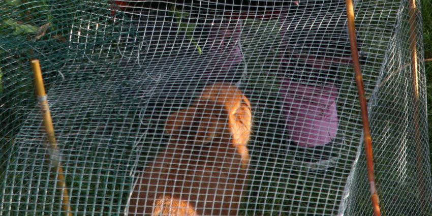 konijn-kooi
