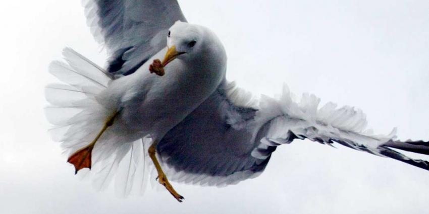 Vogels doodgeschoten in dierenpark Volkel