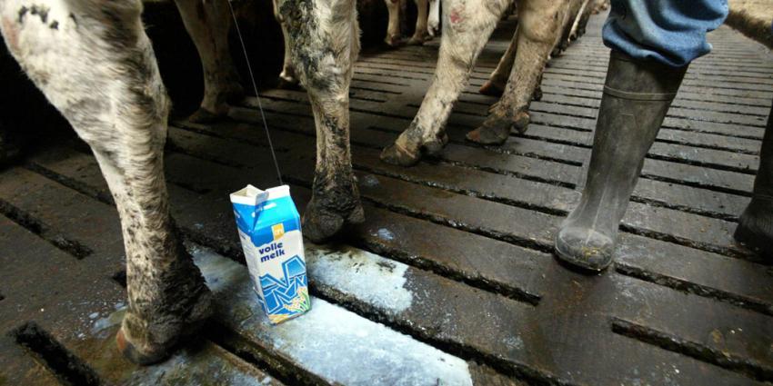 Boze melkveehouders komen antwoord Staatssecretaris anders halen