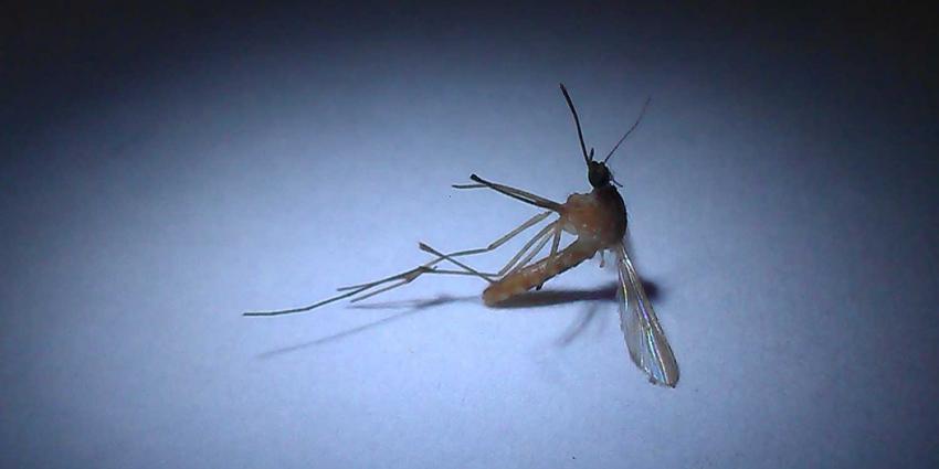 Grote dengue-uitbraak Sri Lanka; Rode Kruis schaalt hulp op