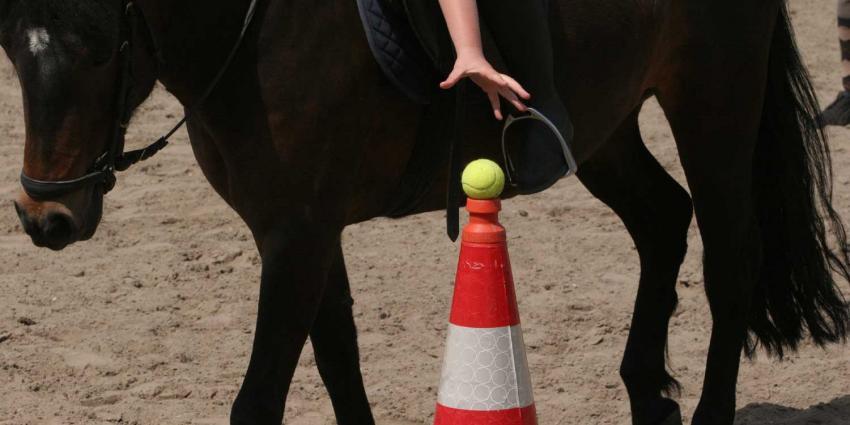 Paarden slaan op hol, zes gewonden