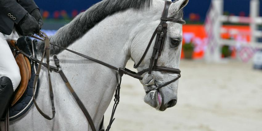 Paard met bit in