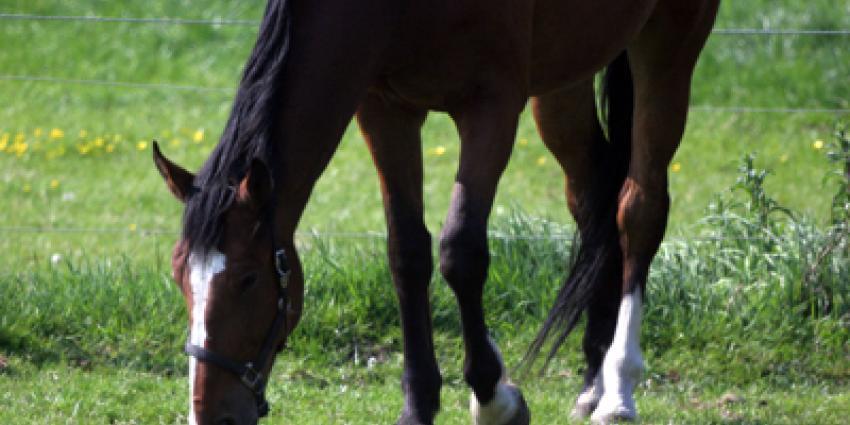 Foto van paard in weiland | Archief EHF