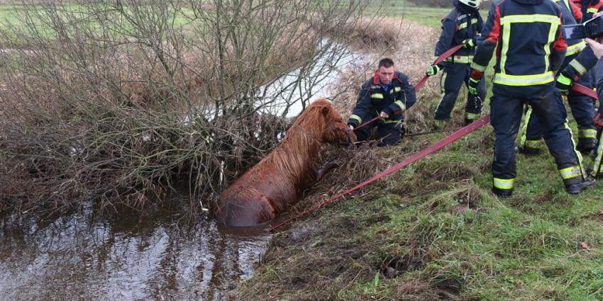 Paard na drie dagen onderkoeld in sloot aangetroffen