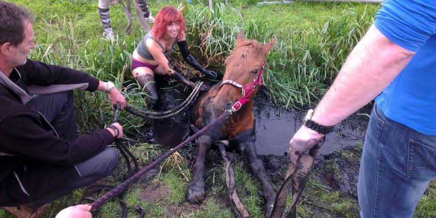 Paard in nood loopt uit op modderbad voor paardenliefhebster