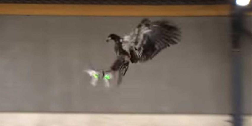 Politie klaar om roofvogels in te zetten tegen vijandige drones