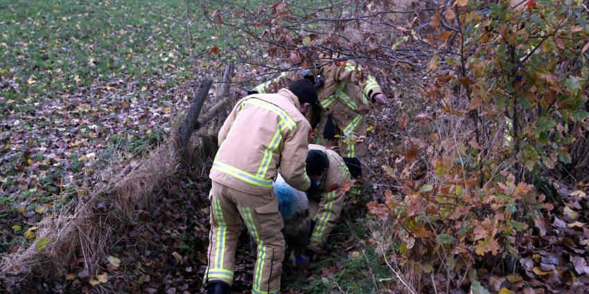 schaap-brandweermannen-weiland