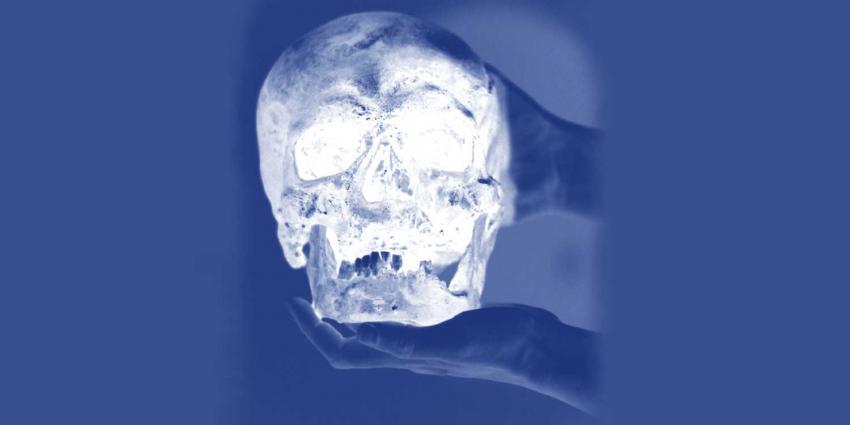 schedel