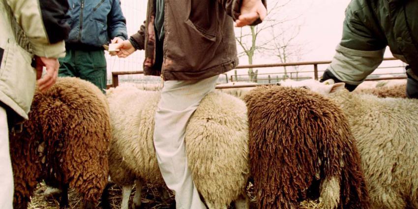 Dierenorganisaties willen verbod op offeren van dieren