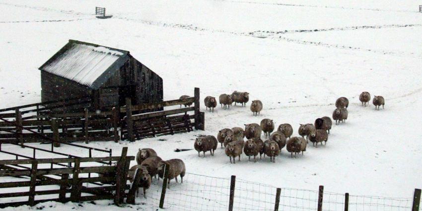 Vandaag sneeuwbui mogelijk en komende week vorst verwacht
