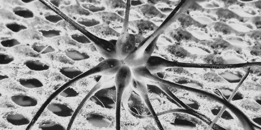 spermatozoide-zaadcel-eicel