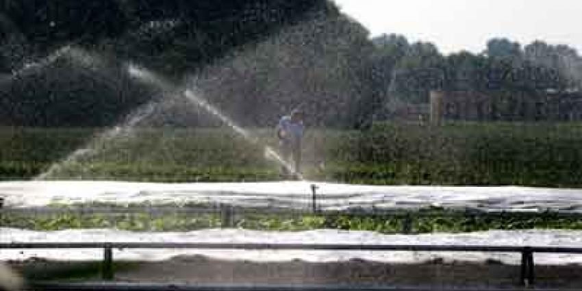 Foto van sproeien gewassen vanwege droogte | Archief EHF