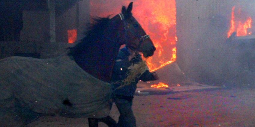 Meer dan 200 duizend dieren verbrand in 2016