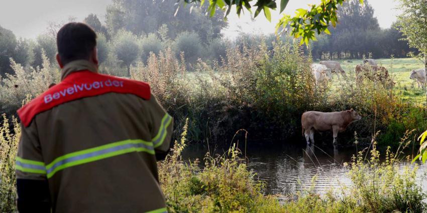 stier-water-brandweer
