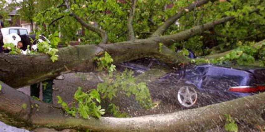 Foto van omgewaaide boom op auto   Archief EHF