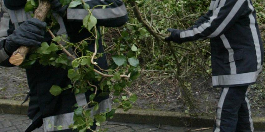 Bomen breken bij Breukelen af als lucifershoutjes