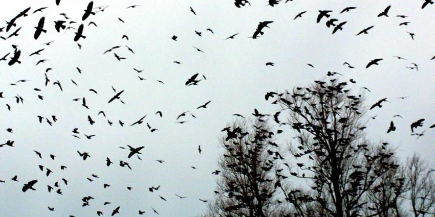 vogelgriep-vogels-boom