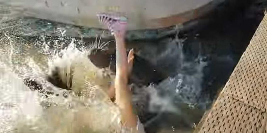 Zeeleeuw trekt meisje het water in